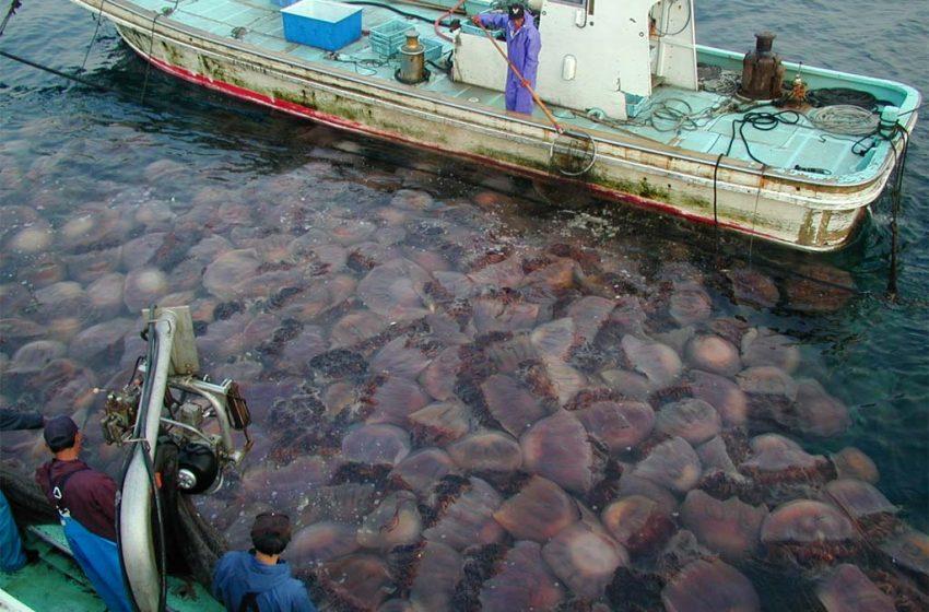 Invasione di meduse nei nostri mari, tutte le opzioni possibili per arginare il fenomeno