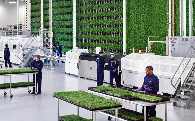 Vertical Farm: Robot ed Intelligenza artificiale per ridurre il suolo occupato
