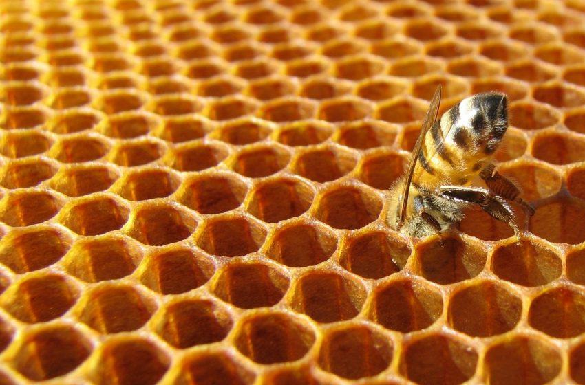 Continua l'ecatombe di api in Europa