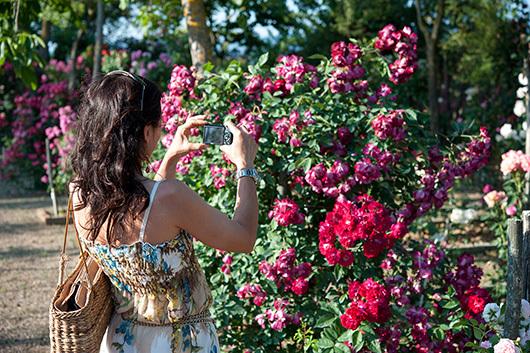 Festa – Evento per l'apertura del magnifico Roseto Fineschi