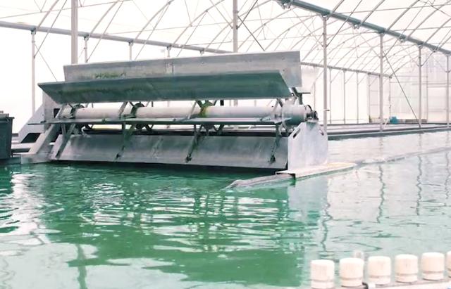 Alga spirulina: inizia la collaborazione di Ecquologia con Biogas Channel