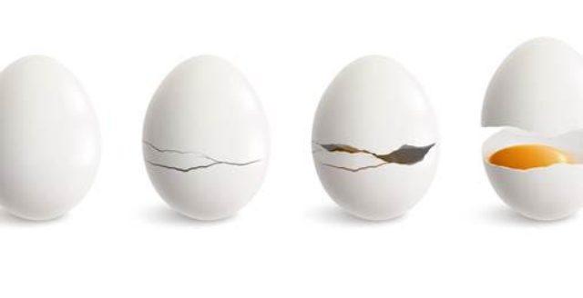 Prima la gallina poi l'uovo, ma il pennuto come sta?