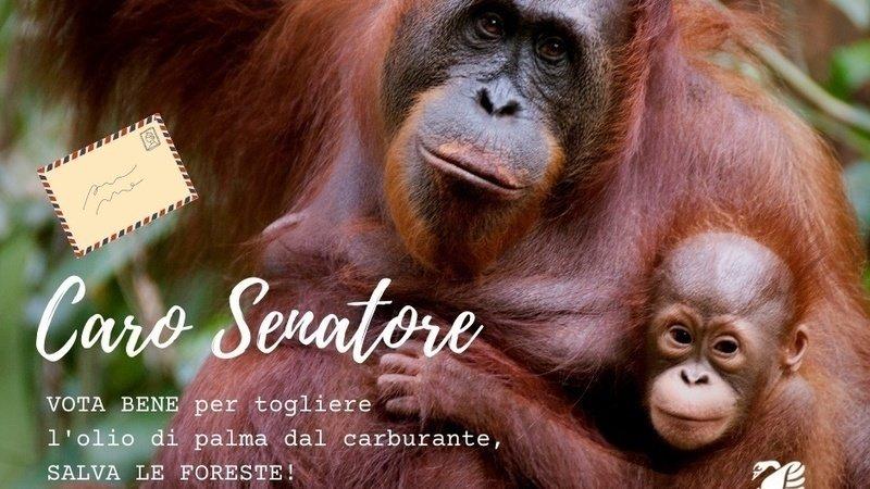 Olio di palma: Voto al Senato previsto per martedì 27 ottobre