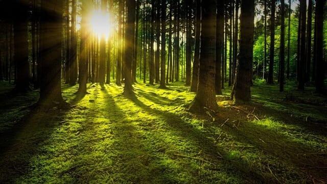 Copertura forestale in Europa: Italia seconda con il 38% del territorio