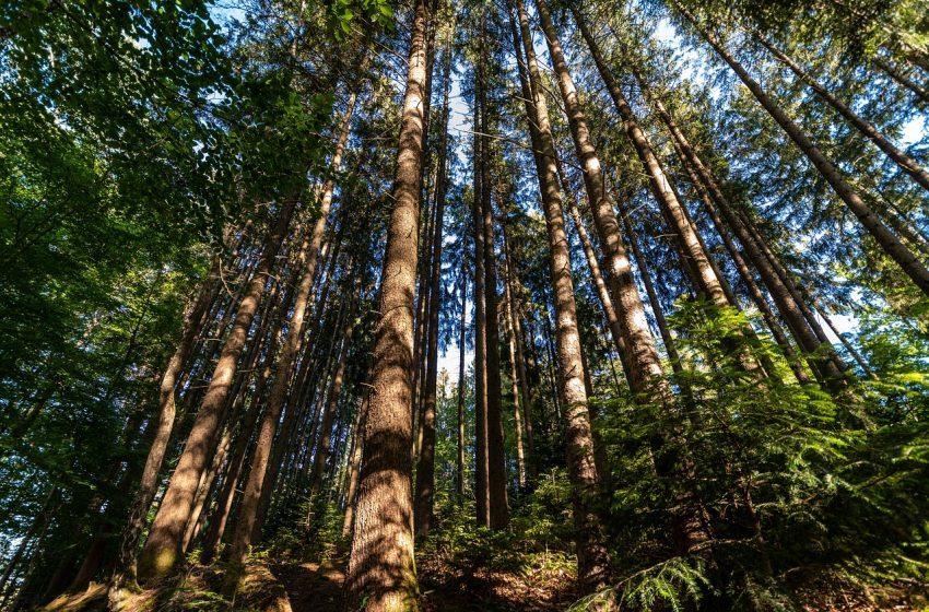 Gestione aree forestali: aumenta in Italia il verde certificato