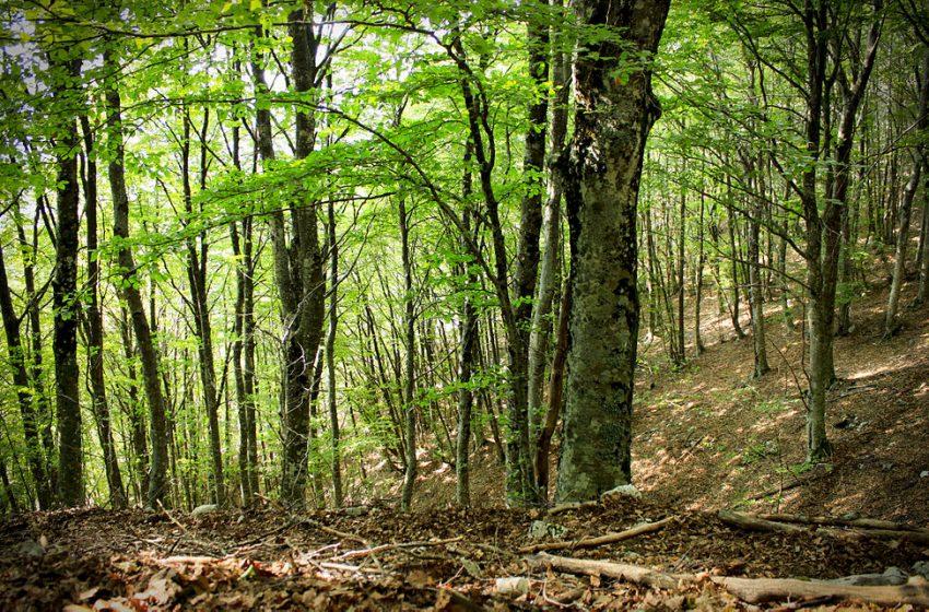 Passato, presente e futuro delle foreste italiane