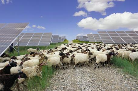 Rinnovabili ed aree agricole: storica sentenza del Consiglio di Stato