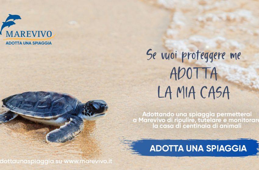 """""""Adotta una spiaggia"""": nuova iniziativa di Marevivo"""