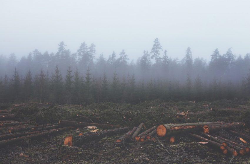 Deforestazione equivalente in Europa: segnali di allarme per l'Italia