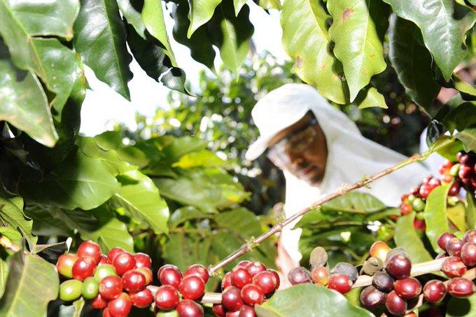 Illy: prima azienda italiana del caffè a diventare BCorp