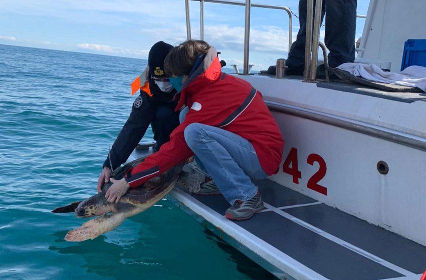 Il lungo viaggio della tartaruga marina Eleonora: dalla Toscana allo Ionio