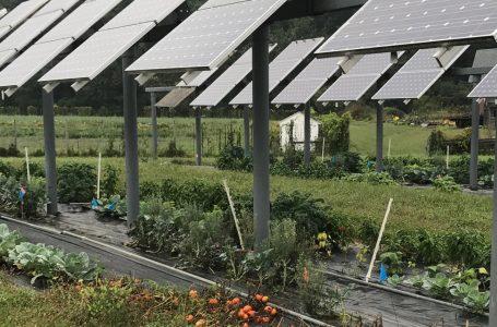 Agro-voltaico: un network per gestire i fondi UE