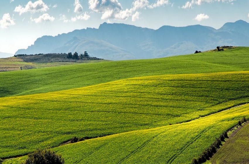 Banca nazionale delle Terre Agricole di Ismea: In vendita oltre 16mila ettari di terreni agricoli