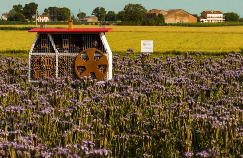 Barilla installa a Parma un apiario che ospita 600mila esemplari