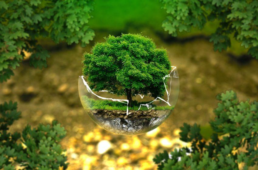 Svolta epocale: la tutela dell'ambiente, degli ecosistemi e degli animali in costituzione