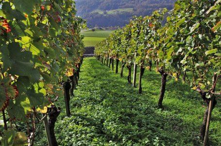 Agricoltura italiana «la più green in Europa»: vendite di pesticidi crollate di un terzo (-32%)
