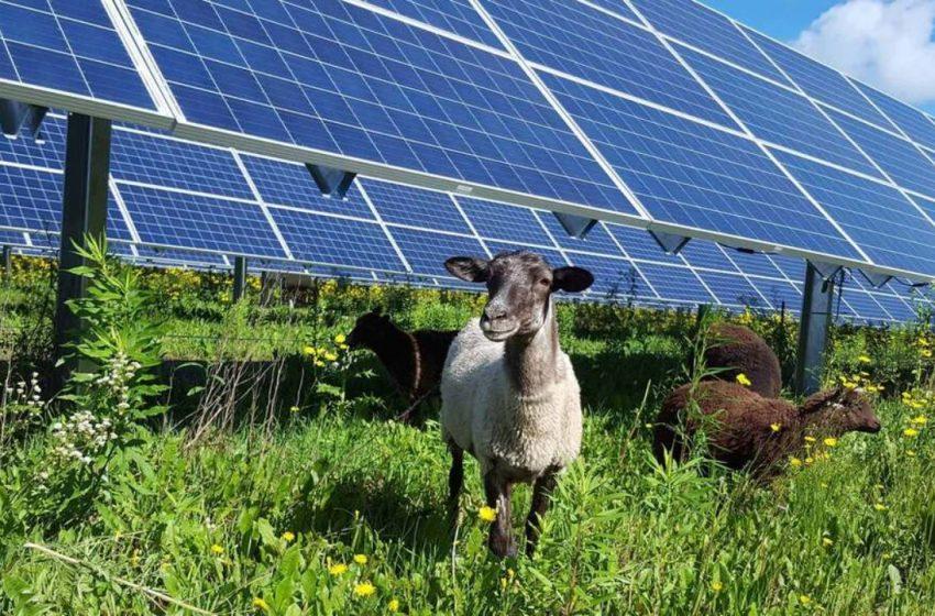 Agrifotovoltaico: 5 proposte per uno sviluppo sostenibile