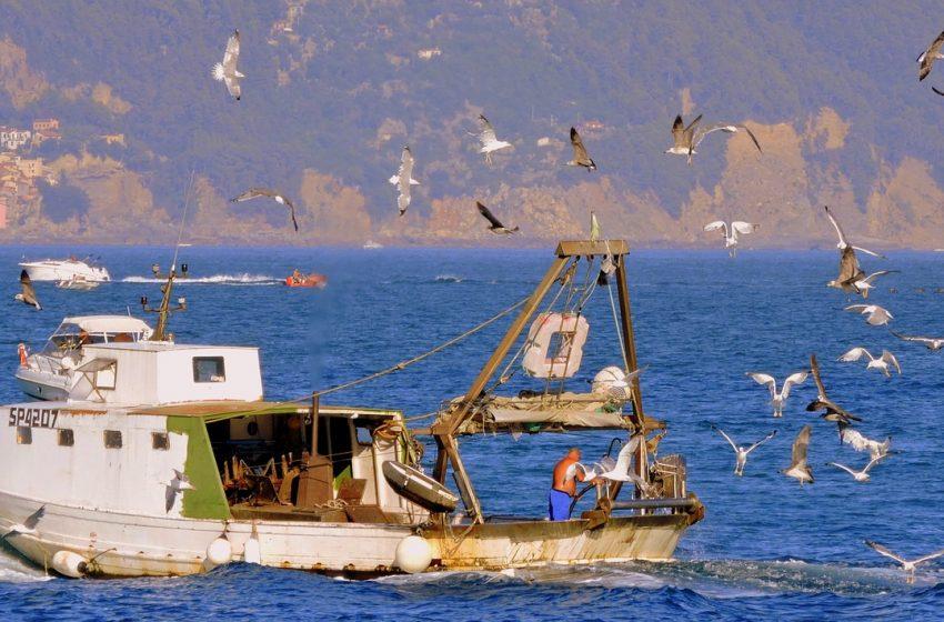 Fondo per la Pesca 2021 – 2027. Rafforzare la sostenibilità del mare