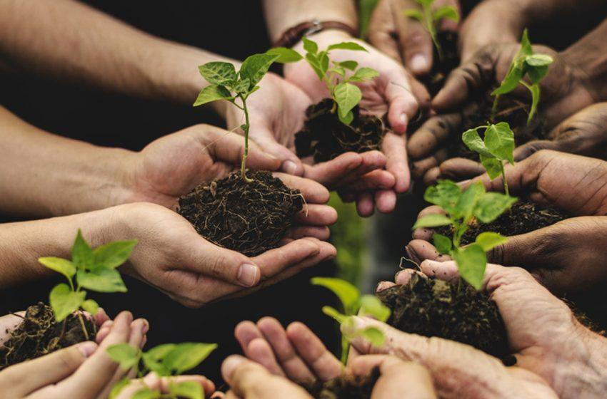 Ecofuturo Festival: CIB presenta l'azione dedicata all'agroforestazione