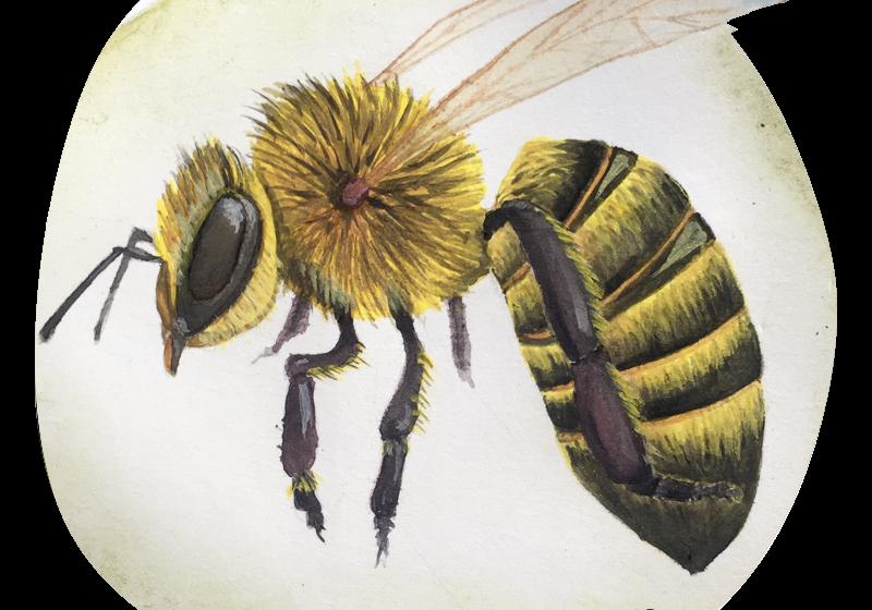 Non solo api