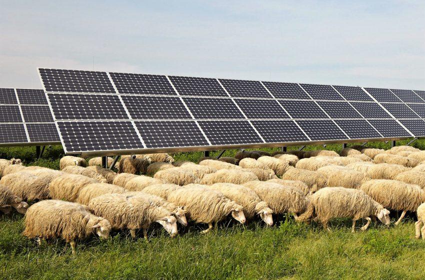 Fotovoltaico in zone rurali, illegittimi i limiti della Regione Toscana