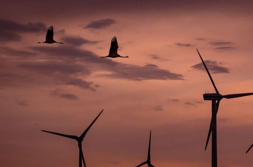 Le 5 peggiori idiozie dette contro l'eolico