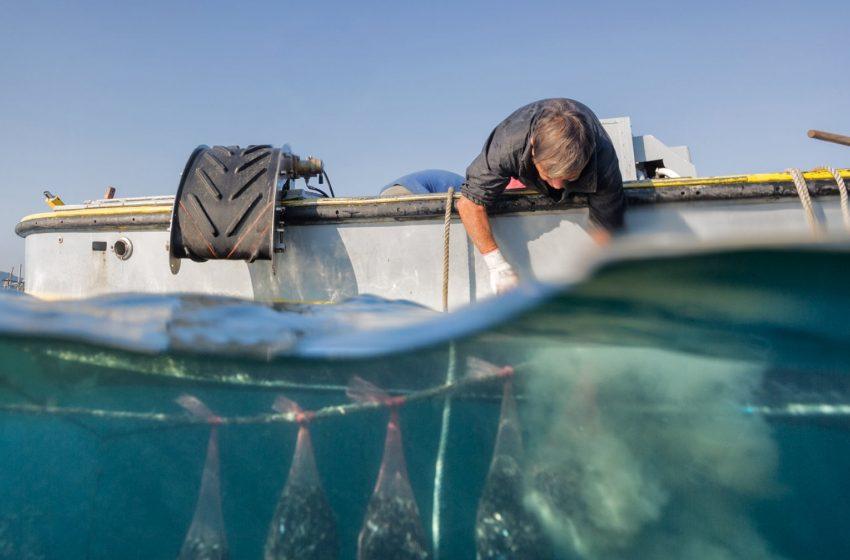 La Molluschicoltura sequestra la CO2