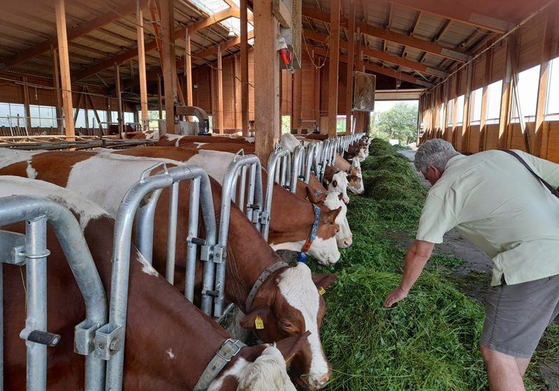 Plocher: allevamenti sostenibili con rivitalizzazione dei suoli