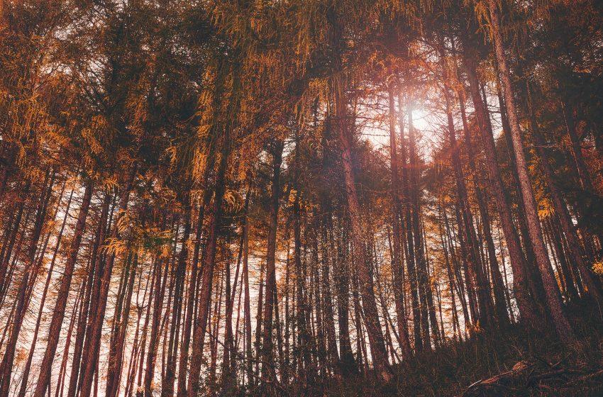 Foreste: presentato il nuovo Inventario Nazionale