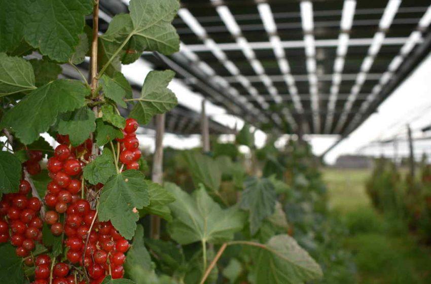 Regioni contro l'agrovoltaico. La protesta di Italia Solare
